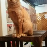 http://catcafe-shana.hp-tsukurumon.jp/wp-content/uploads/sites/3144/2016/04/header20160403143310_469505990.jpg