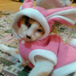 http://catcafe-shana.hp-tsukurumon.jp/wp-content/uploads/sites/3144/2017/03/header20170318082224_866263663.jpg