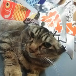 http://catcafe-shana.hp-tsukurumon.jp/wp-content/uploads/sites/3144/2017/04/header20170429104320_241482673.jpg