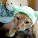 http://catcafe-shana.hp-tsukurumon.jp/wp-content/uploads/sites/3144/2017/06/header20170615033212_669736393.jpg