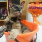 http://catcafe-shana.hp-tsukurumon.jp/wp-content/uploads/sites/3144/2017/09/header20170930084456_886601999.jpg