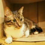 http://catcafe-shana.hp-tsukurumon.jp/wp-content/uploads/sites/3144/2017/11/header20171123103818_435349093.jpg