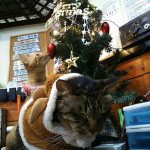 http://catcafe-shana.hp-tsukurumon.jp/wp-content/uploads/sites/3144/2017/12/header20171211181418_825959711.jpg