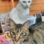 http://catcafe-shana.hp-tsukurumon.jp/wp-content/uploads/sites/3144/2018/01/header20180131160214_326345047.jpg