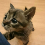 http://catcafe-shana.hp-tsukurumon.jp/wp-content/uploads/sites/3144/2018/06/header20180608135942_037534893.jpg