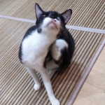 http://catcafe-shana.hp-tsukurumon.jp/wp-content/uploads/sites/3144/2018/09/header20180929195908_996367813.jpg