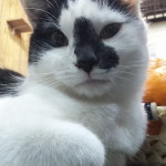 http://catcafe-shana.hp-tsukurumon.jp/wp-content/uploads/sites/3144/2018/11/header20181110162841_790872992.jpg