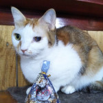 http://catcafe-shana.hp-tsukurumon.jp/wp-content/uploads/sites/3144/2019/02/header20190214133454_615166205.jpg