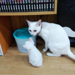 http://catcafe-shana.hp-tsukurumon.jp/wp-content/uploads/sites/3144/2019/04/header20190427075500_150000844.jpg