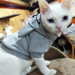 http://catcafe-shana.hp-tsukurumon.jp/wp-content/uploads/sites/3144/2019/11/header20191106094115_837154856.jpg